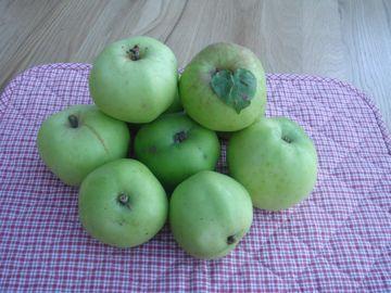 秋の実りのりんご狩り_e0114020_16134346.jpg