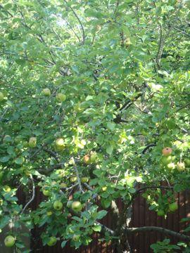 秋の実りのりんご狩り_e0114020_5151441.jpg