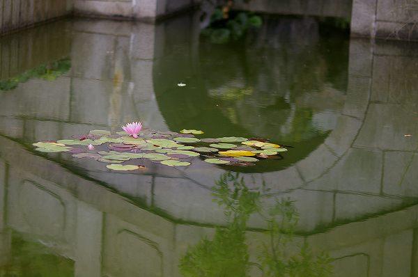 水面に映る橋の影・・・姉妹都市公園_d0043136_2154925.jpg