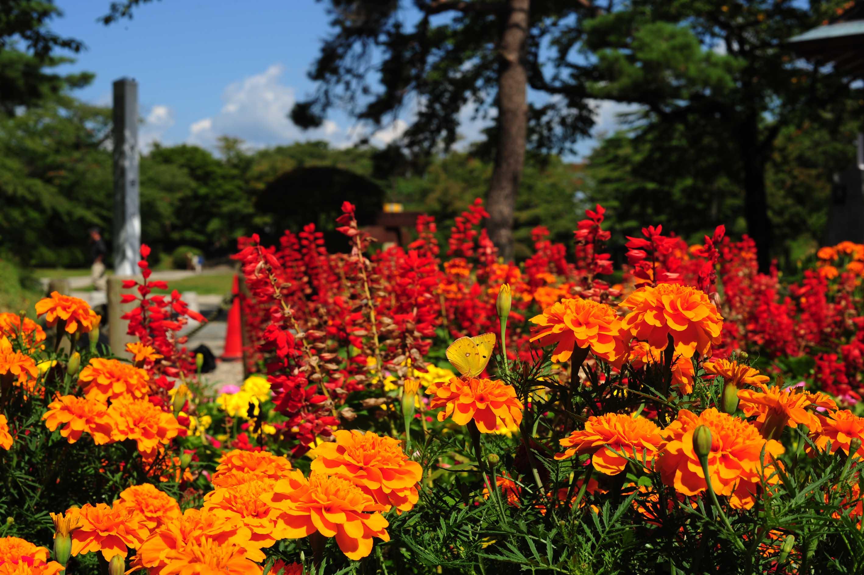 花って、、、_e0157647_7315095.jpg