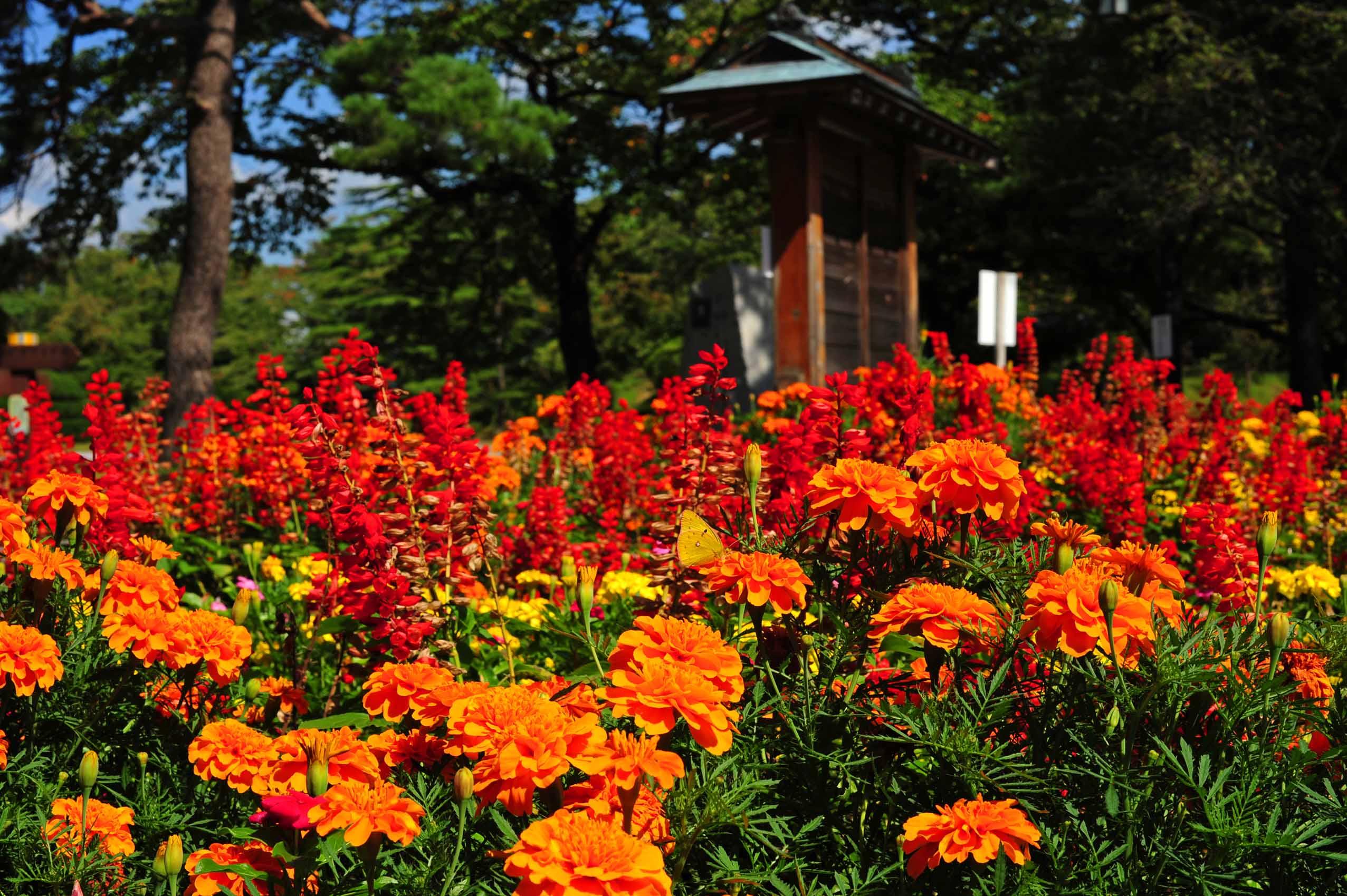 花って、、、_e0157647_7322144.jpg