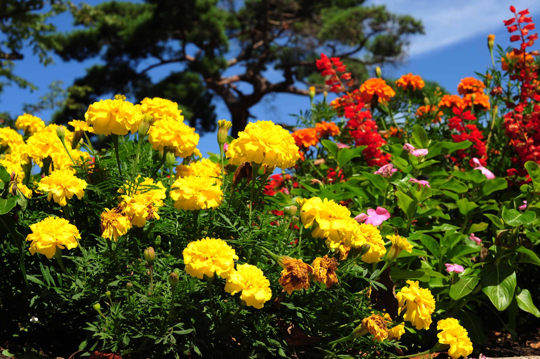 花って、、、_e0157647_7324640.jpg