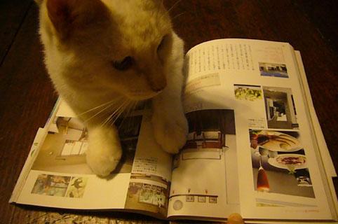cover cat._c0153966_21172896.jpg