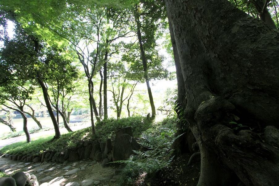 秋の庭                      小石川後楽園_a0107574_842862.jpg