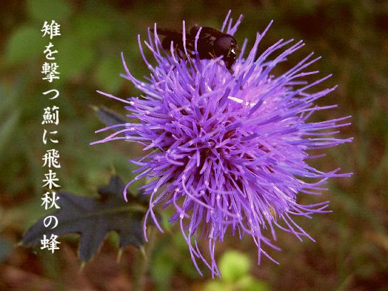 秋の蜂_e0099713_18443263.jpg