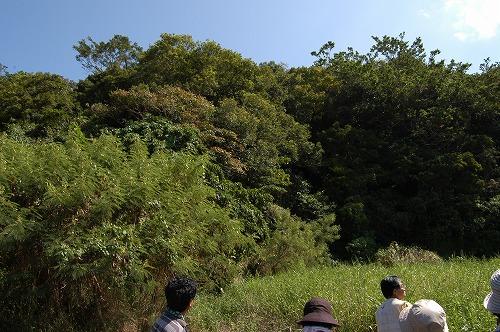 南部の自然観察会_c0180460_1815321.jpg
