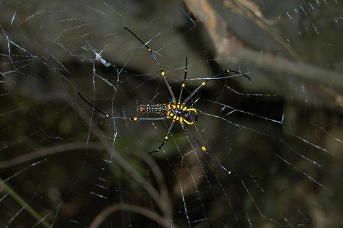 南部の自然観察会_c0180460_1839041.jpg