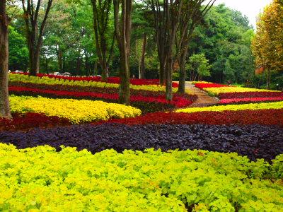 武蔵丘陵森林公園_a0027275_16592947.jpg