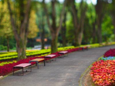 武蔵丘陵森林公園_a0027275_1702249.jpg