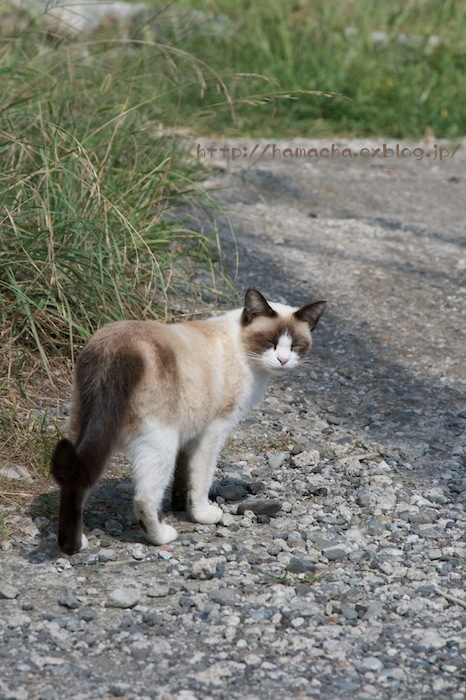 Cats in Shonan #55_c0158775_2053191.jpg