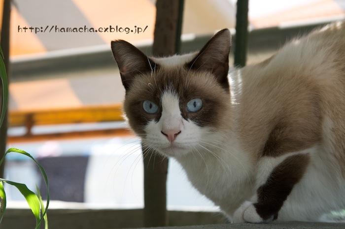 Cats in Shonan #55_c0158775_20534322.jpg