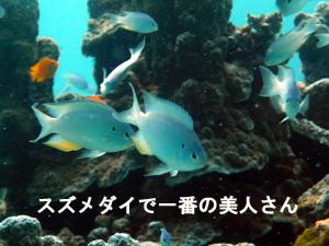 サンゴ島!さすがだぜぃ大盛りサンゴ!_f0144385_043277.jpg