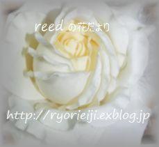b0163486_17305432.jpg