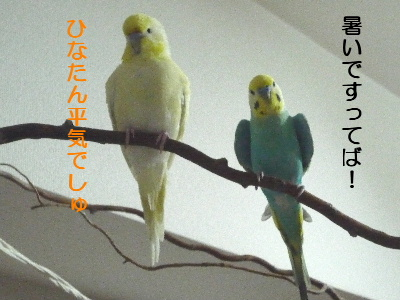 b0062090_22415335.jpg