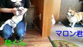 f0175397_21381919.jpg