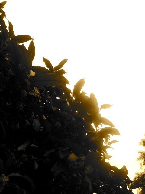 f0179202_20114968.jpg