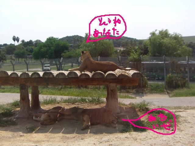 和歌山③_a0088007_183417.jpg