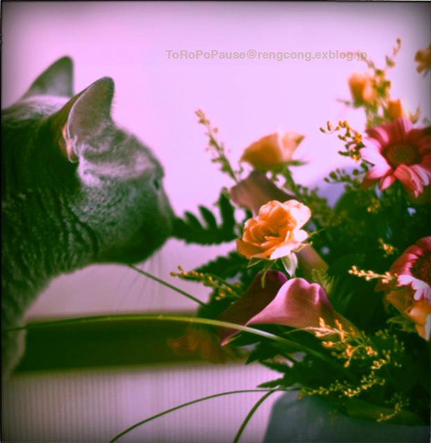 花と猫と_e0132518_12293648.jpg