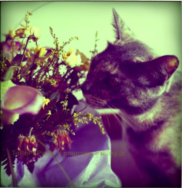 花とチビと_e0132518_12333168.jpg