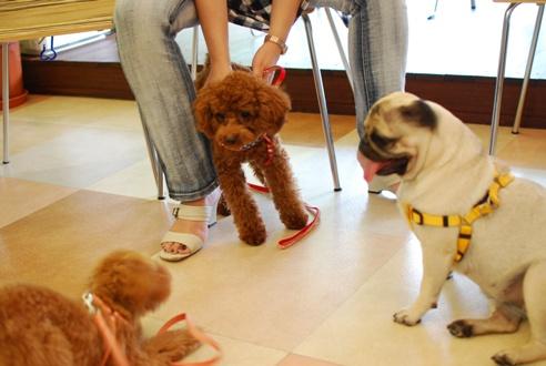 初めての子犬の勉強会_c0099133_1916516.jpg