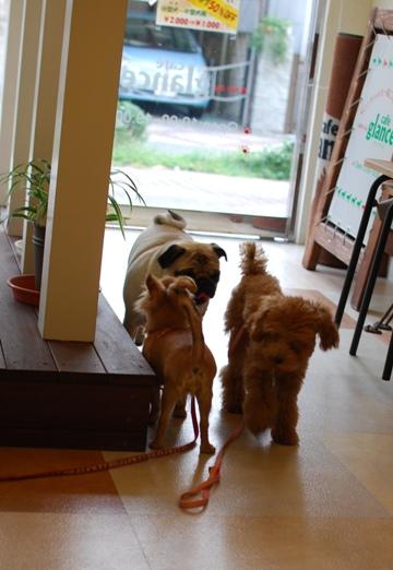 初めての子犬の勉強会_c0099133_19172736.jpg