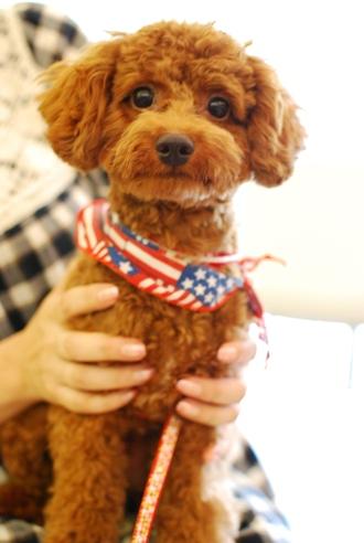 初めての子犬の勉強会_c0099133_19175043.jpg