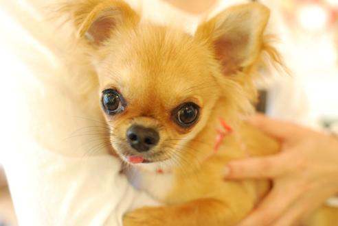 初めての子犬の勉強会_c0099133_1918255.jpg