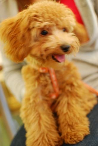 初めての子犬の勉強会_c0099133_19254011.jpg