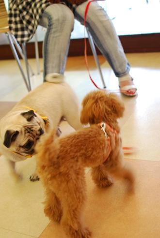 初めての子犬の勉強会_c0099133_1926292.jpg