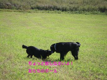 b0091153_18544174.jpg