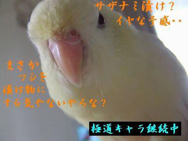 b0082757_041245.jpg