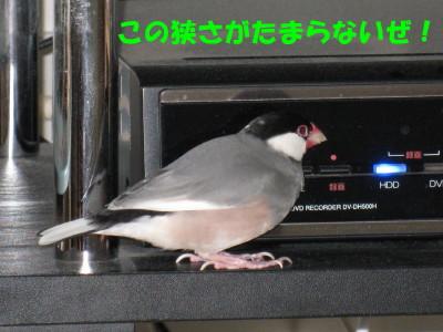 b0158061_21113100.jpg