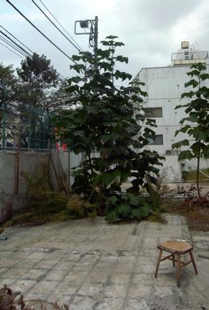 f0160063_1991367.jpg