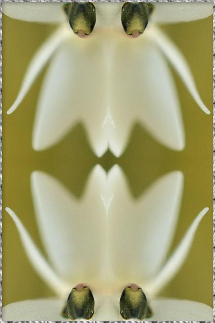 b0190068_2345028.jpg