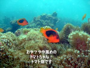 どんぶらこっ、どんぶらこっとピピ島へ_f0144385_00364.jpg