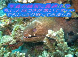 大賑わい!ナイスダイブでダイビング☆_f0144385_22485129.jpg