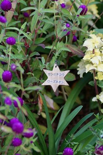 箱根の星の王子さまミュージアム その2_b0145398_11322772.jpg