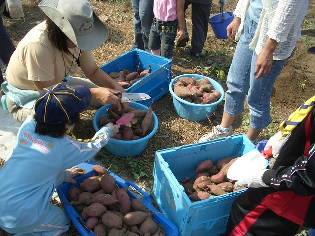 沼川のイモ掘り体験とカヌー教室_f0141310_23353275.jpg