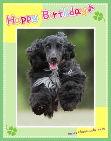 ケフィくん、お誕生日おめでとう♪_d0102523_12101752.jpg