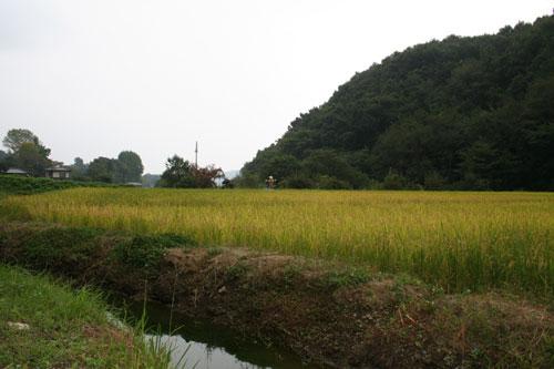 稲刈り_f0171840_16292698.jpg