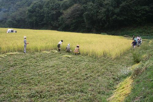 稲刈り_f0171840_162983.jpg