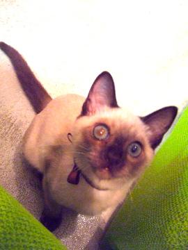 cats成長記録_b0071355_2101934.jpg