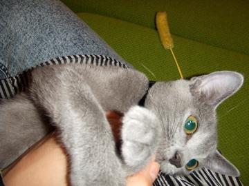 cats成長記録_b0071355_2104636.jpg