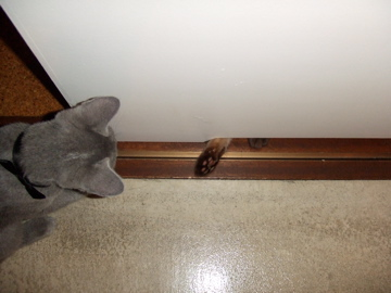 cats成長記録_b0071355_21115100.jpg