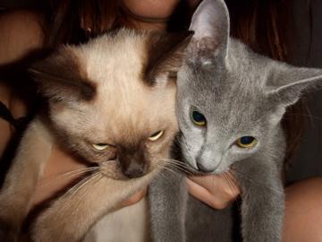 cats成長記録_b0071355_2114410.jpg