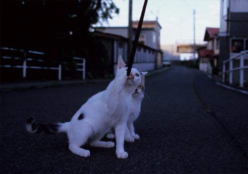 津軽の猫_c0181457_6282561.jpg