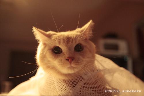 キティには口がない_a0002672_23302529.jpg