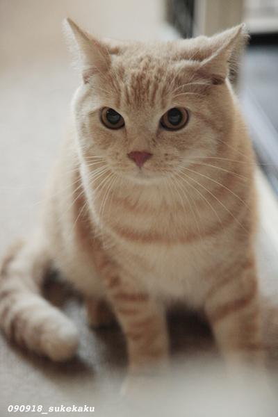 キティには口がない_a0002672_23313159.jpg