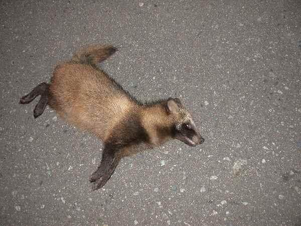 ある野生の死_f0075075_5304796.jpg