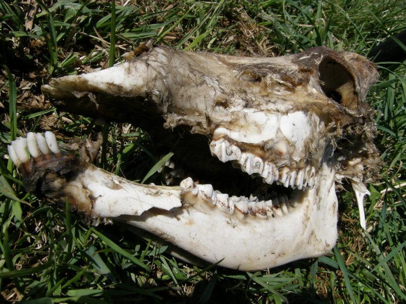 ある野生の死_f0075075_737074.jpg